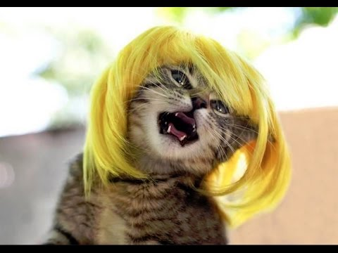 Funny Crazy Cats! - Funny Animals Compilation of the Funniest Pets in the World