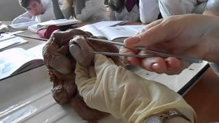 Анатомия. Часть 4(, 2013-03-17T09:23:50.000Z)