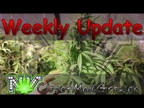 Weekly Update 10/19/2017
