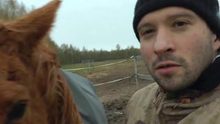 Ловим дикую лошадь