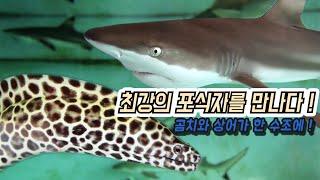 해수어 탐방 (Feat . 곰치 And 멕시칸늑대거북 …