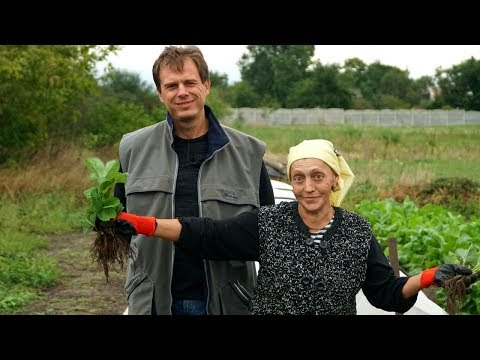Посадка клубники осенью. Секретный ингредиент для шикарного урожая