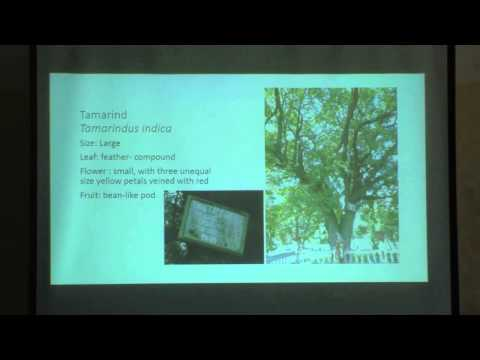 Talk Space: Trees of Hyderabad