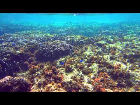 Calming Music.Healing Music.10 min.Coral Reef