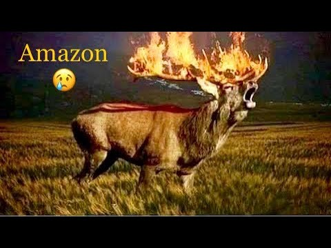 Amazon Forest Fire Sad Tragedy Prayforamazon Youtube