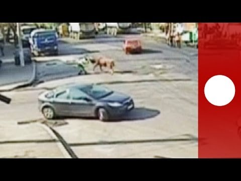 Video: Charging  bull attacks traffic warden in the middle of street in Romania