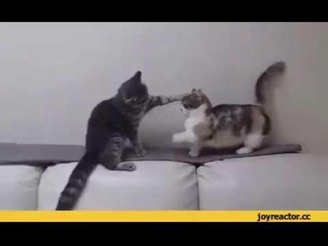 Приколы с котами. Подборка позитива