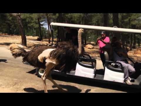 Türkiye'nin ilk safari parkına büyük ilgi