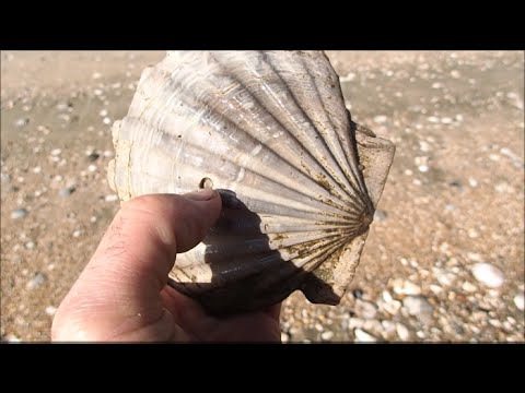 A Fossil Collecting Adventure