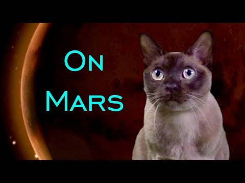 In The Name of Science: Burmese Cat + NASA Mars InSight Lander! 🚀