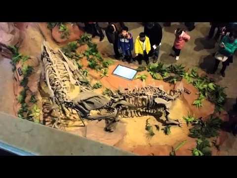 china sichuan zigong dinosaurs museum