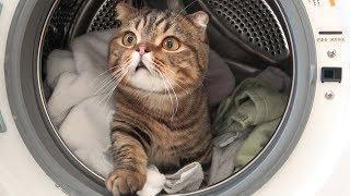 「ここは満員だ…」猫さん、洗濯機の中に巣を作る