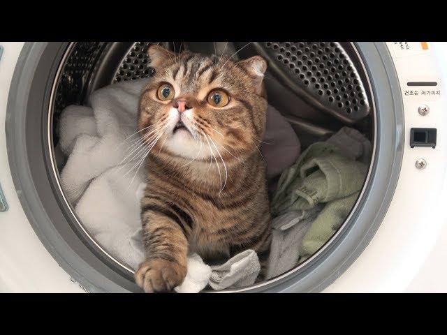 猫が洗濯機に巣を作りました (日本語字幕)