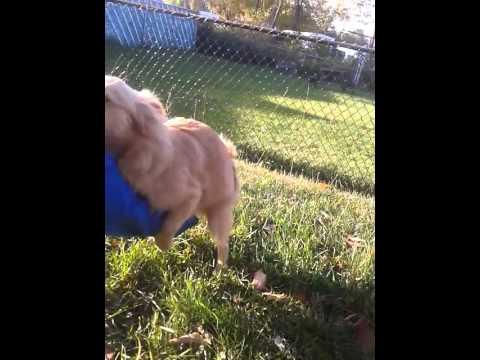 dog rape video