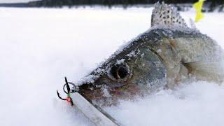 ОСТОРОЖНО ЗЛЫЕ СУДАЧКИ Зимняя рыбалка 2020 ловля судака на балансир раттлин и блесну