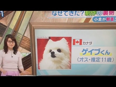 Gabe the Dog on Japanese TV
