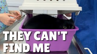 Cats scared at the vet | Uni and Nami | Catz Club