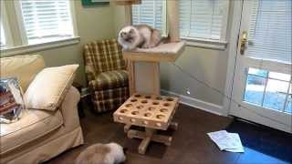 Ragdoll Cats Review Cat Power Tower Designer Cat Tree For Review - ねこ - ラグドール - Floppycats