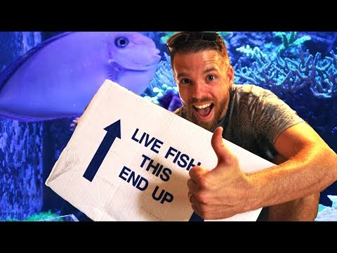 Buying Saltwater Fish And Corals Online | Reefs4less .com Review