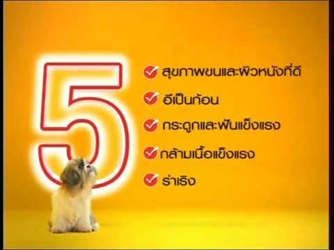 Pedigree Thailand Small Breed TVC.wmv