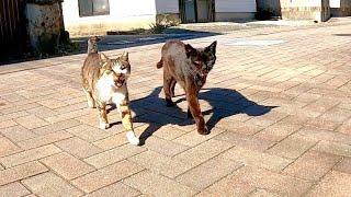 通りを歩いていると二人組の猫に絡まれた