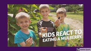 Kids react to eating a Mulberry