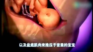 Скачать Рождение ребёнка видео подробная анимация