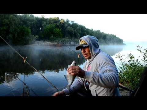 Фидерная рыбалка на Десне. Ловля белой рыбы