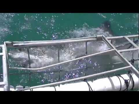 Zuid Afrika 6 - Shark Cage Diving Gansbaai - Zuid Afrika