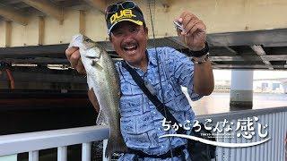 ちかごろこんな感じ~東京湾 陸っぱりシーバス~夏の湾奥デイゲーム(867)