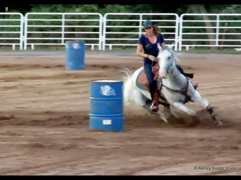 Yes Sir Im Gone - 1D 2D Barrel Prospect - Strekin La Jolla, Dash For Cash Gray Gelding - Buster