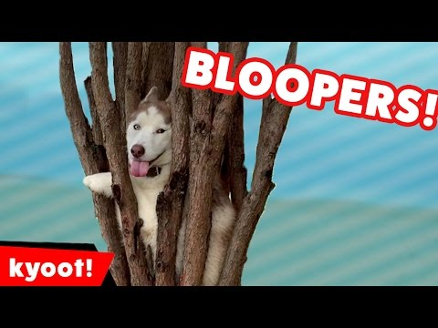 The Cutest Animals of 2016 | Bloopers, Outtakes, and BTS