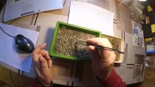 Пикировка сеянцев кактусов. Как пересадить мелкие сеянцы кактусов?