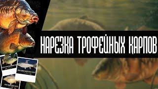 РУССКАЯ РЫБАЛКА 4 | НАРЕЗКА ТРОФЕЙНЫХ КАРПОВ, БОЛЕЕ 15 ТРОФЕЕВ + 3 РЕДКИХ ТРОФЕЙНЫХ КАРПА