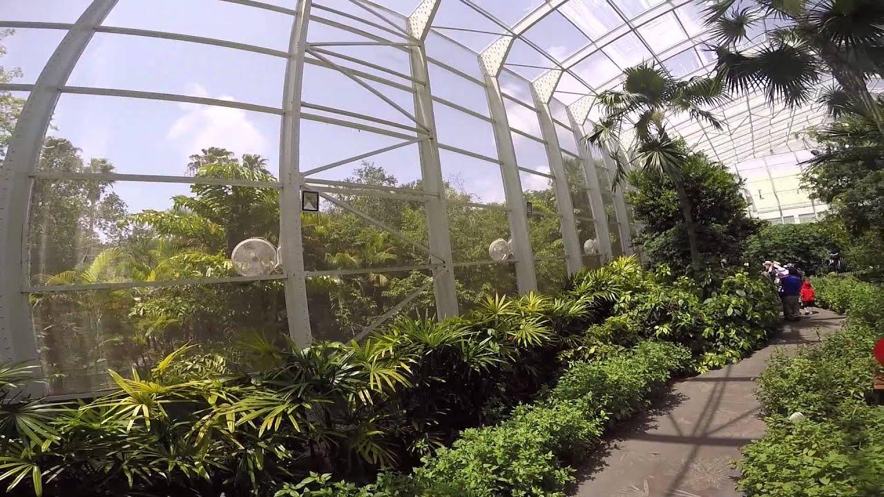 Fairchild Tropical Garden   Butterflies   YouTube