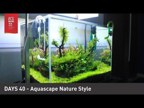 Day 40 Aquascape Nature Style - YouTube