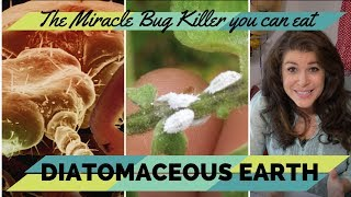 Diatomaceous Earth! The Wonder Powder you can eat and kill bugs with at the same time.