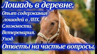 Лошадь в деревне/Опыт содержания в ЛПХ