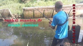 Download Video Mancing Nila pakai mantra dari mbah jambul  mbah jambul (2/2) MP3 3GP MP4
