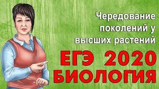 ЕГЭ БИОЛОГИЯ 2019 | ЧЕРЕДОВАНИЕ ПОКОЛЕНИЙ У ВЫСШИХ РАСТЕНИЙ!