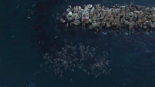 Birds Eye View Of Sea Lion Island