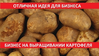 видео Бизнес план по выращиванию картофеля на продажу