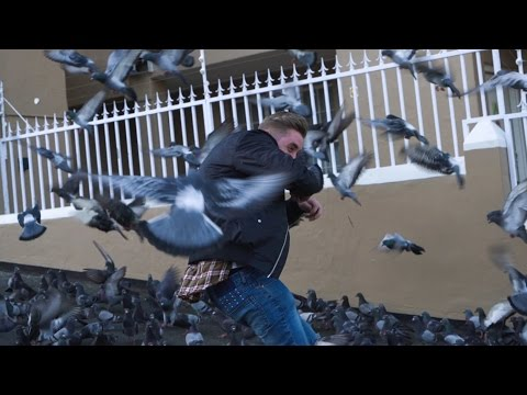 CRAZY BIRD ATTACK IN SOUTH AFRICA!