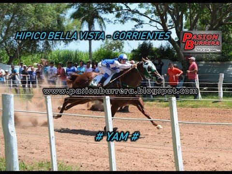 Yam, Bell Vista (04-02-18)