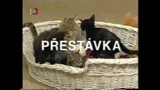 Přestávka s koťaty v ČST - ČSSR