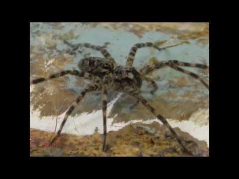 Vermont Wood Shop Spider