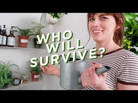 TESTING PLANTS THAT SURVIVE IN ZERO LIGHT!?