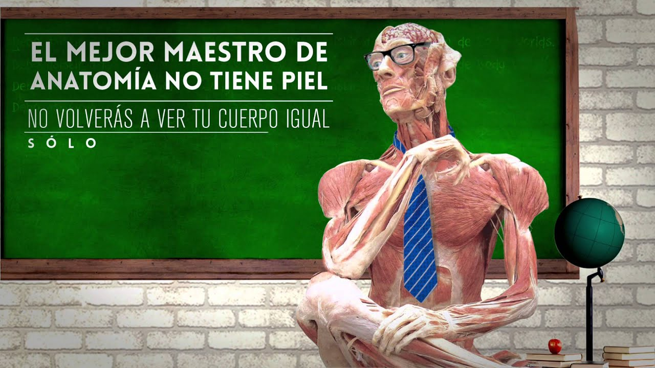 Body Worlds día del maestro - YouTube
