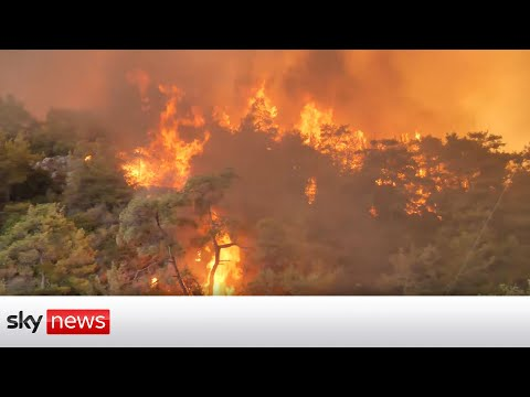 Special report: Turkey's firefighters battle more forest blazes