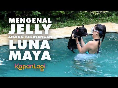 Luna Maya Berenang dan Mandikan Anjing Kesayangan, Jelly